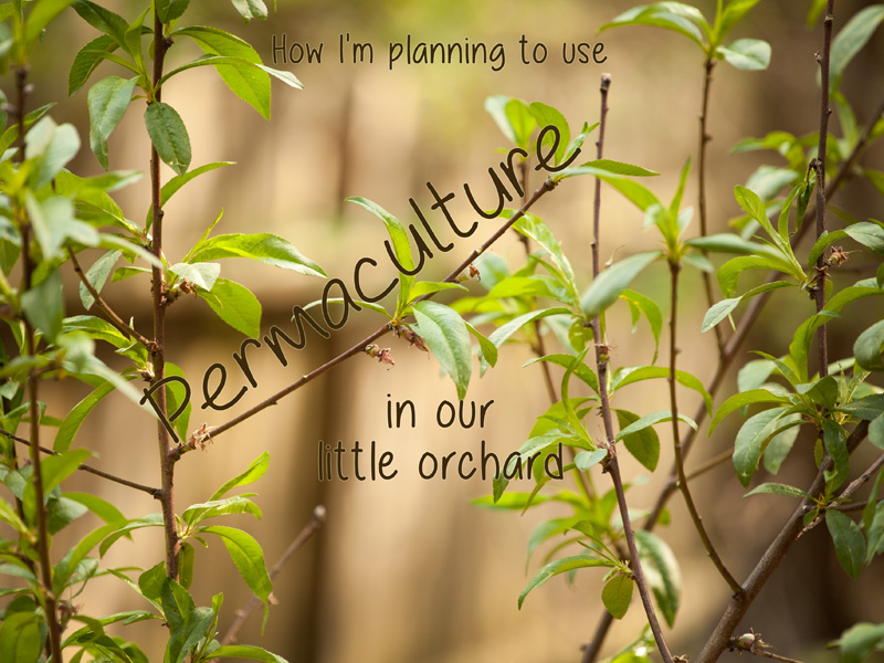 post header permaculture