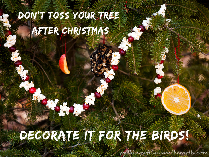 decorate your Christmas tree for the birds